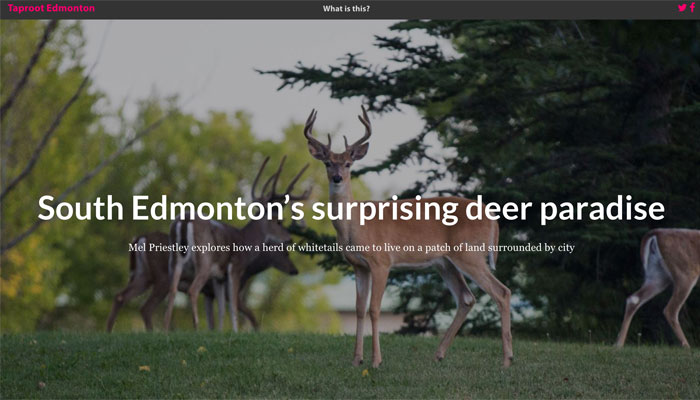 South Edmonton's Surprising Deer Paradise by Mel Priestly